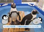 ペンギンを派遣!?移動水族館ならイベント21!